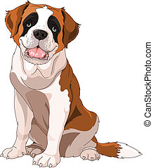 St Bernard Dog, sitting in front of white background