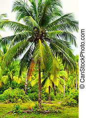 Tropic Jungle - green coconut palm against blue sky...