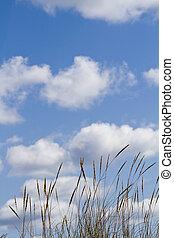 dune flora landscape