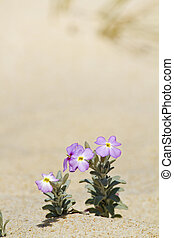 beach dune flora