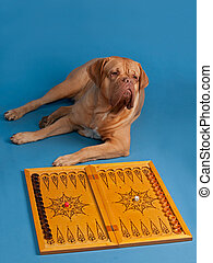 Dog playing backgammon