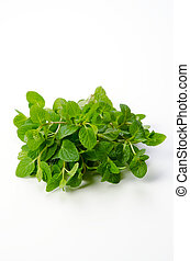 Spearmint - Cooking ingredient series Spearmint. available...