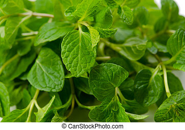 Spearmint - Cooking ingredient series Spearmint. for adv...