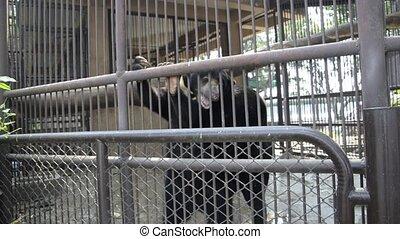 bear in public zoo footage