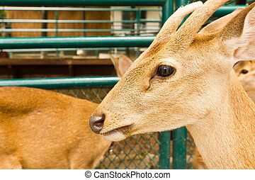 Deer head close-up at the zoo.