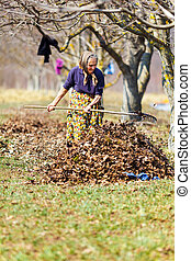 Old woman working in the orchard