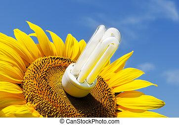 energy saving lamp in sunflower