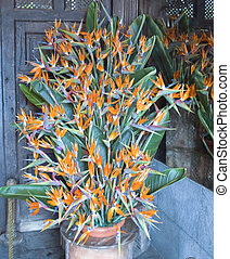Strelitzia flowers -  next to each other in a pot, vertical