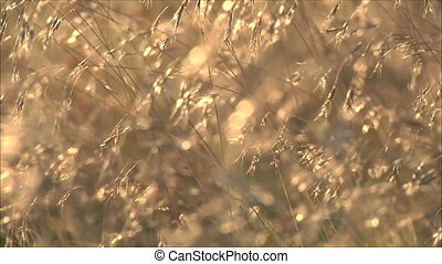 autumn grass at sunset 5