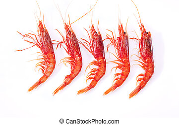 Shrimp, red and orange on a white background