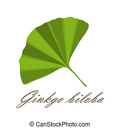 Ginkgo leaf symbol - vector illustration