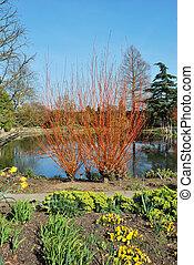 Formal english garden in sun