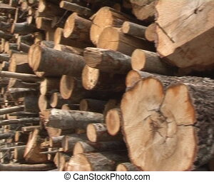 production of biofuel - placed in pile logs for production...
