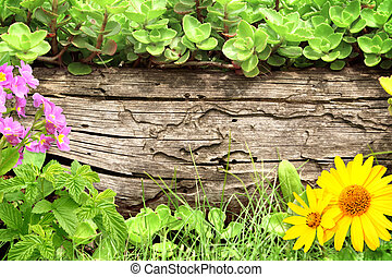 Summer background with old wooden plank, flower, grass and...