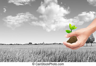 hand holding sprout with soil,green eco concept