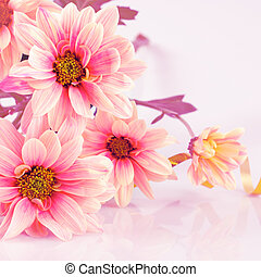 Pink daisy with gold ribbon - Pink daisy, old stylized....