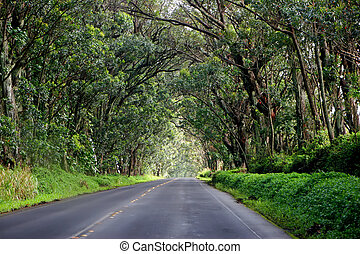 Scenic Road - Road Shaded by a Canopy of Eucalyptus Trees...