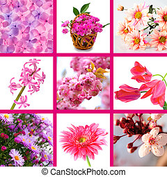 pink flowers collage