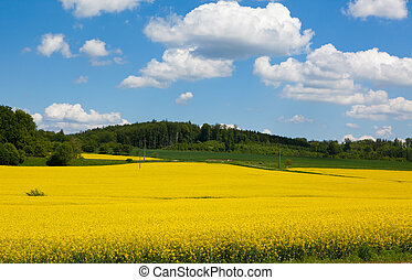 Mustard Field in Bloom Landscape - A photo of a mustard...