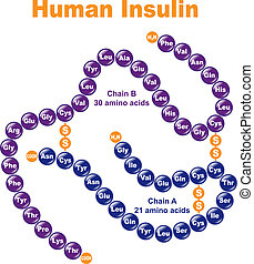 Human Insulin Stylized chemical structure