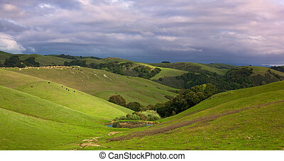 Pastoral hillside with cattle in spring - Pastoral...