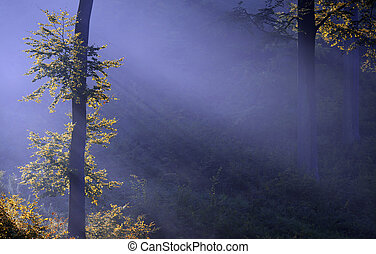 forest - a forest illuminated by the sunlight