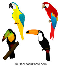 Parrots and tukans, birds of Africa - Collection of exotic...