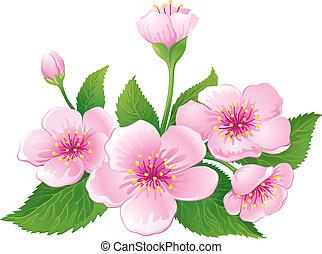 Cherry Blossom - Cherry blossom