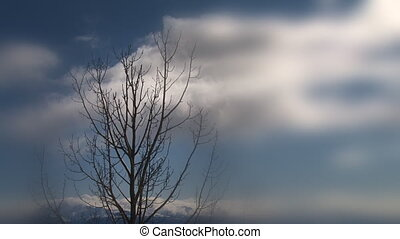Stark Tree in Spring Branch Clouds - A stark leafless tree...