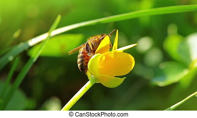 spring flower and small bee