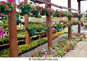 Flowers in hanging baskets - Hanging baskets filled with...
