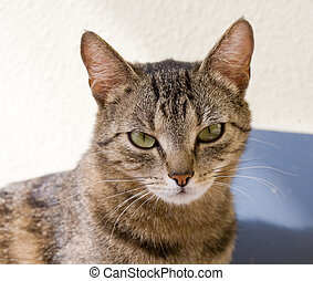 Young female housecat. - Portrait of relaxed looking young...