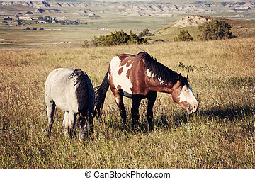 Wild Horses in Theodore Roosevelt National Park, North...