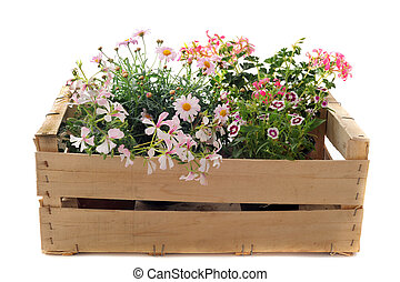 flowers in a crate - Close up of hanging geraniums, daisies...