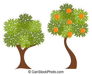 Trees - Two trees with green leaves Orange tree illustration...