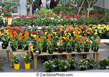 display of flowering plants for sale inside a greenhouse in...