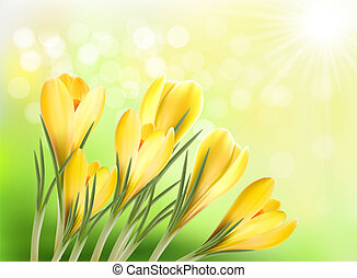springl background with crocus - springl background with...