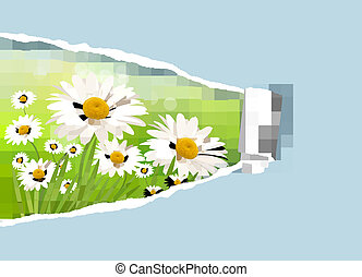 Nature background with fresh daisy