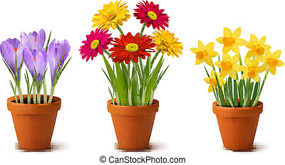 Printemps, coloré, fleurs, pots