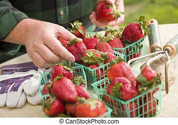 fresco, reunión, fresas, cestas, granjero