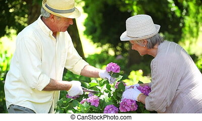Retired man cutting a flowers for his wife in their garden