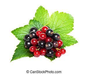 vermelho, pretas, groselha, verde, folhas