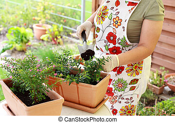 Replanting - Elderly woman replanting flowers for better...