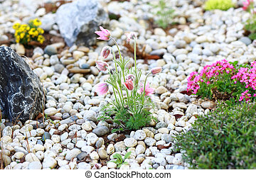 Rockery - Small rock garden constructed with rocks and...