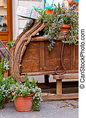 Sled and lavanda plants  - Photo of sled and lavanda plants