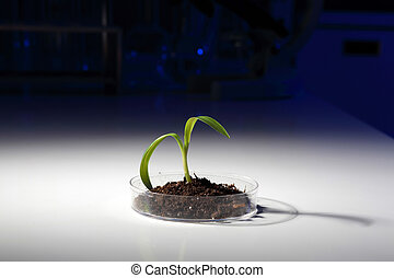 Small green plant on the table - Small green plant and soil...