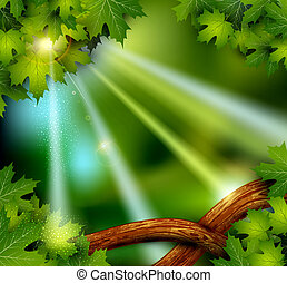 fundo, místico, misteriosa, floresta, árvores