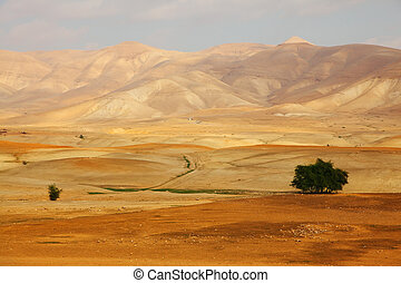 Desert Sinai in a morning - Desert Sinai in the early...