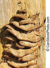 growth on a tree trunk
