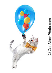 cute  cat with bow and  balloons